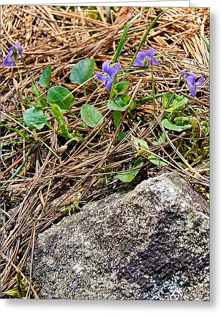 Heart Of Waterfalls Greeting Cards - Miniature Wild Wood Violet - Daves Falls - Amberg Wisconsin Greeting Card by Carol Toepke