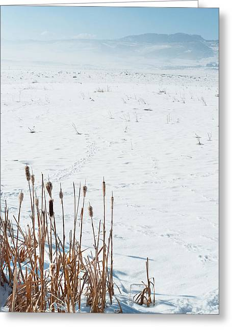 Fort Collins Greeting Cards - Minimalist Cattail Prairie in Colorado Greeting Card by Julie Magers Soulen