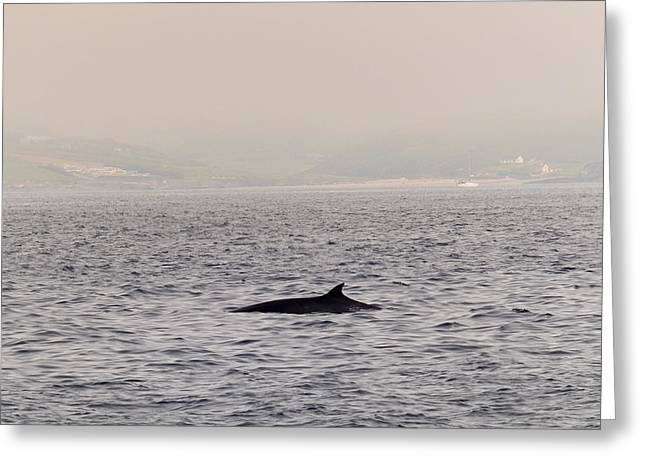 Whale Photographs Greeting Cards - Minke Whale Greeting Card by Kai Bergmann