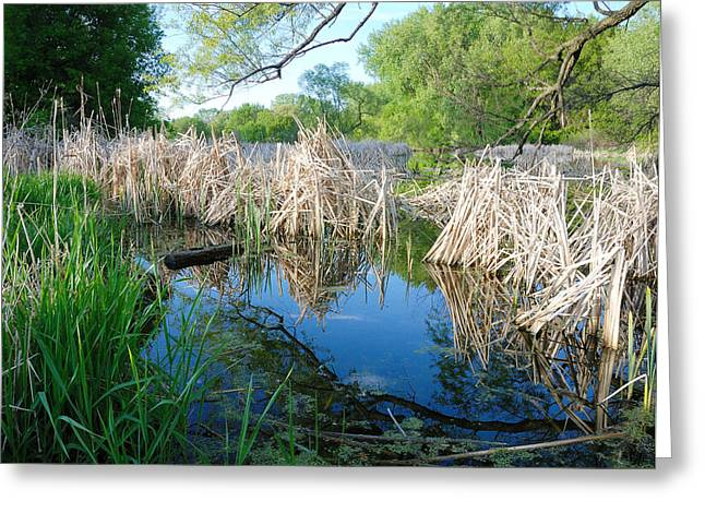 Wetland Greeting Cards - Minnesota Wetland Greeting Card by Jim Hughes