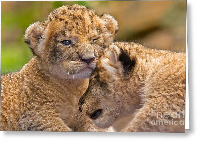 Youthful Greeting Cards - Minor Collision Greeting Card by Ashley Vincent
