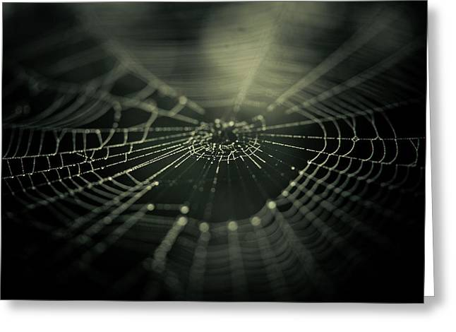 Spider Web Greeting Cards - Minus Zero Greeting Card by Shane Holsclaw