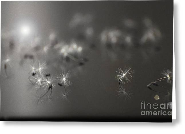 Luz Greeting Cards - Miracle of lights Greeting Card by AdSpice Studios