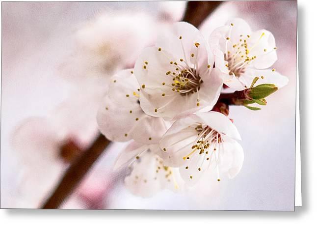 Pink Flower Branch Greeting Cards - Mirage Greeting Card by Alexander Senin