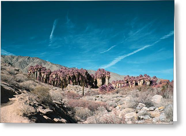 Infrared Greeting Cards - Mirage Greeting Card by Laurie Search