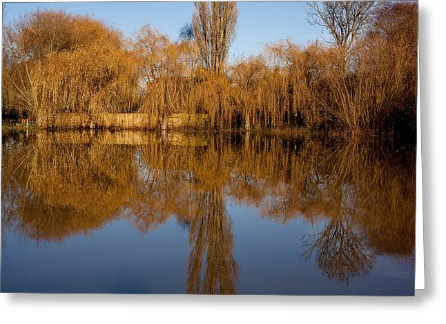 River Flooding Greeting Cards - Mirror  Devon Park Newark Greeting Card by Darren Peet