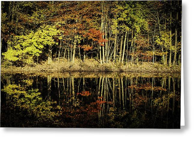 Reflection Of Trees In The Forest Greeting Cards - Mirrored Reflections in Autumn Greeting Card by Olahs Photography