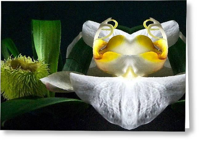 Karo Evans Greeting Cards - Mirrored White Phalaenopsis Greeting Card by Karo Evans