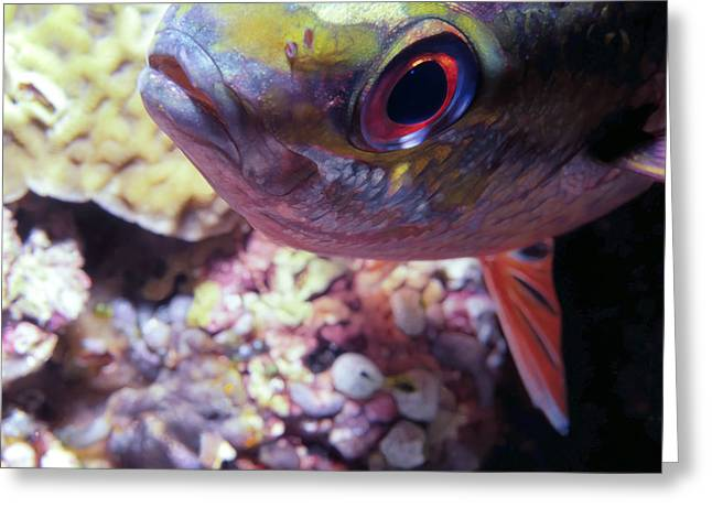 Miscellaneous Fish 5 Greeting Card by Dawn Eshelman