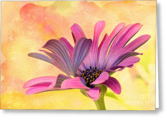 Florida Flowers Greeting Cards - Miss Daisy Greeting Card by Sabrina L Ryan