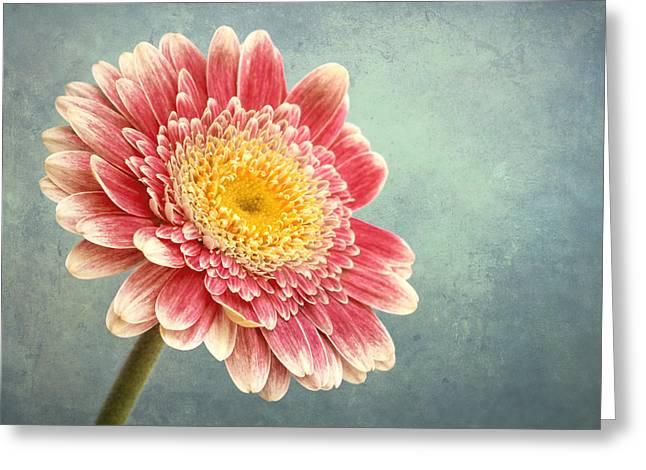 Texture Flower Greeting Cards - Miss Daisy Greeting Card by Wim Lanclus
