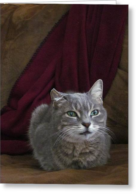 Photos Of Cats Photographs Greeting Cards - Miss Lucille Greeting Card by Guy Ricketts