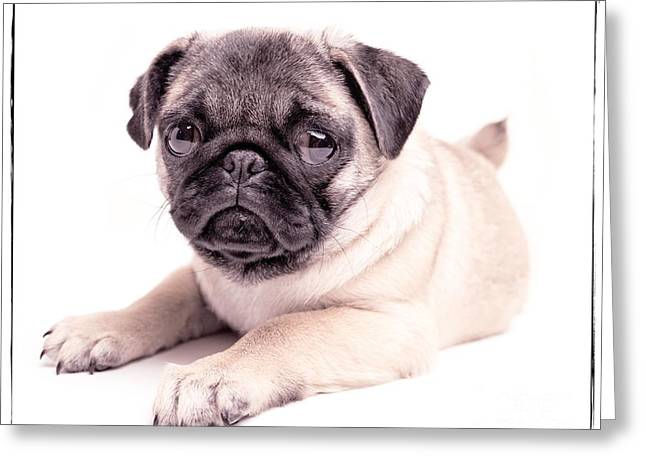 Puppy Dog Eyes Greeting Cards - Miss You Greeting Card by Edward Fielding
