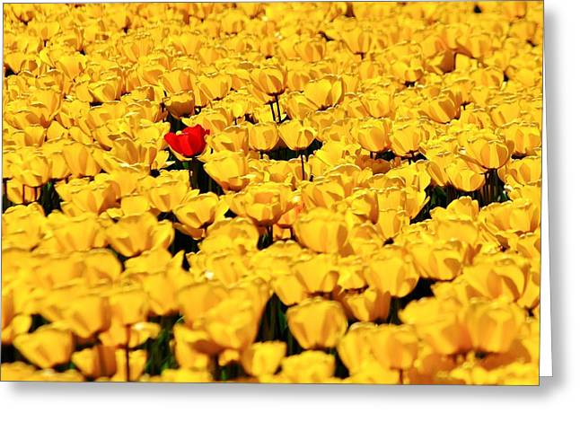 Individualism Greeting Cards - Missed the Yellow Memo Greeting Card by Benjamin Yeager