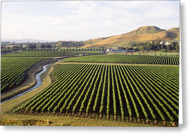 Vineyard Landscape Greeting Cards - Mission Vineyard, Hawkes Bay North Greeting Card by Panoramic Images