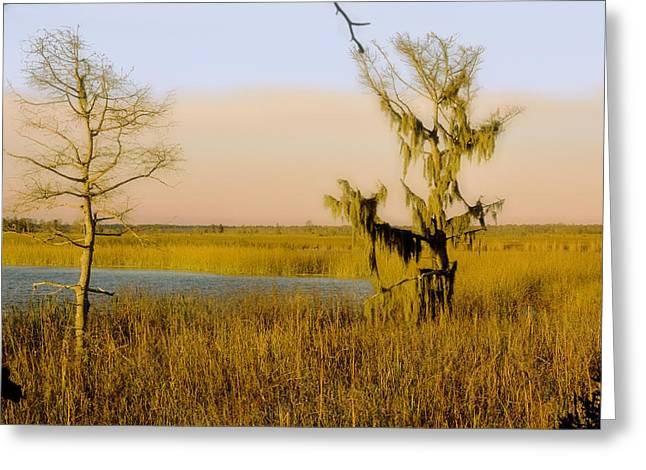 Mangrove Forest Greeting Cards - Mississippi Farragut Lake Greeting Card by Manuel Lopez