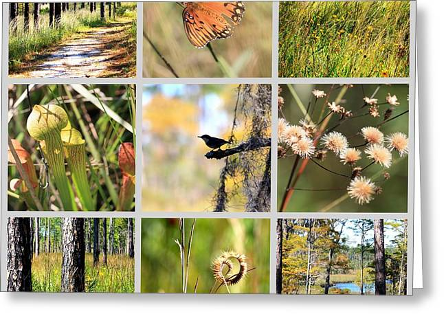 Mississippi Gulf Coast Greeting Cards - Mississippi Nature Collage Greeting Card by Carol Groenen