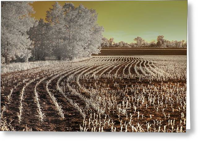 Infrared Photography Greeting Cards - Missouri Corn Field Greeting Card by Jane Linders