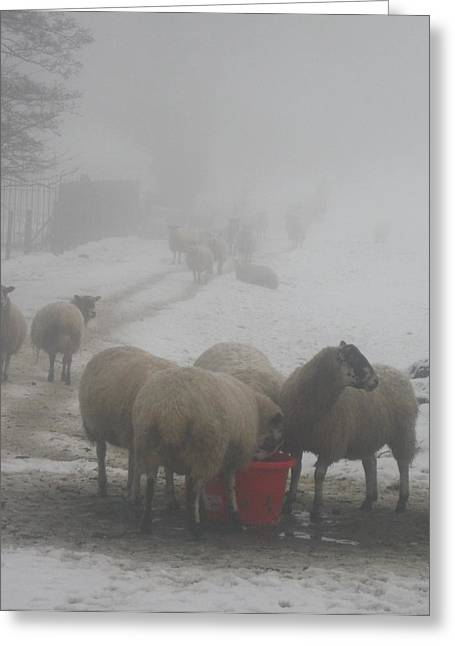 Whalley Greeting Cards - Mist and snow festive sheep. Greeting Card by Deborah  Storey