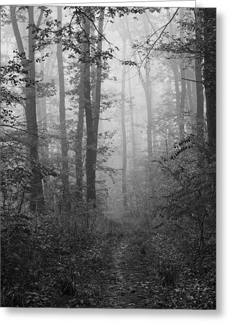 Insecurity Greeting Cards - Mist Greeting Card by Daniel Csoka