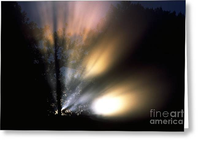 Big Sur California Greeting Cards - Mist In Forest Greeting Card by Art Wolfe