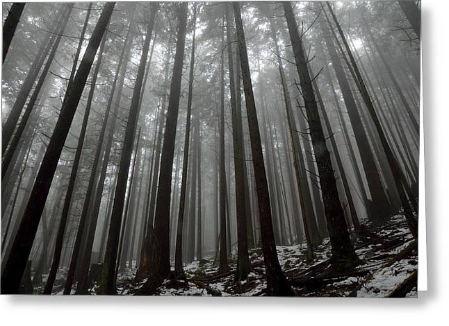 Mist In The Woods Greeting Card by Kathy King