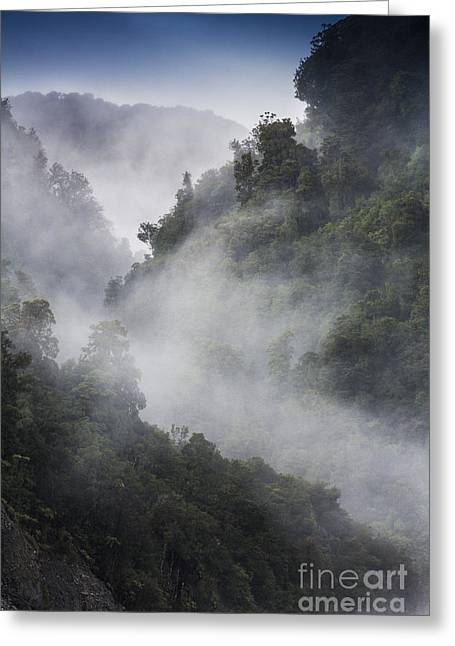 Josef Greeting Cards - Mist in trees at Franz Josef glacier Greeting Card by Sheila Smart