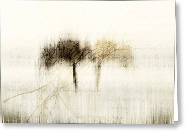 Mist On My Wood Greeting Card by Antonis Gourountis