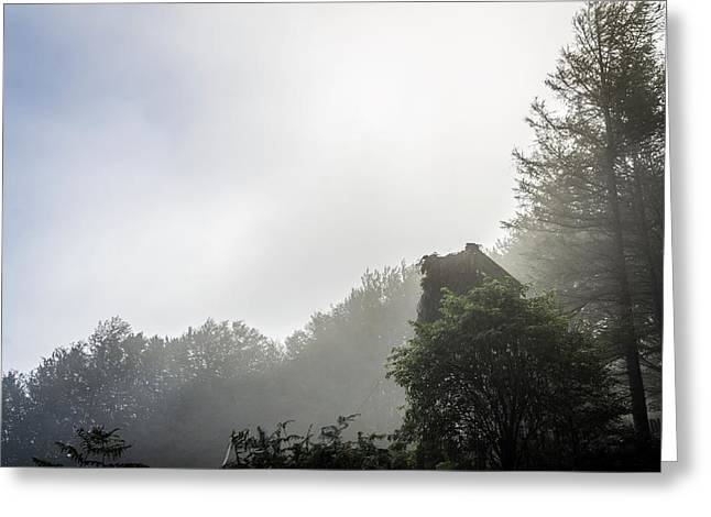 Green Day Greeting Cards - Mist over the forest Greeting Card by Tilyo Rusev