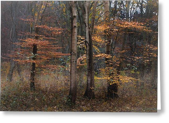 Dream Scape Greeting Cards - Mistic Autumn Greeting Card by Hugo Bussen