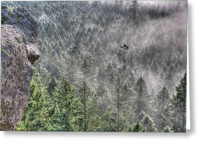 Fir Trees Greeting Cards - Mistique Greeting Card by Randy Hall