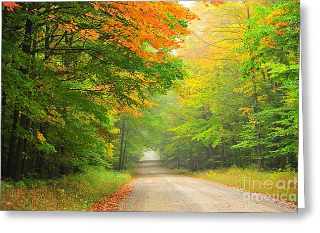 Fall Trees Greeting Cards - Misty Autumn Trail Greeting Card by Terri Gostola