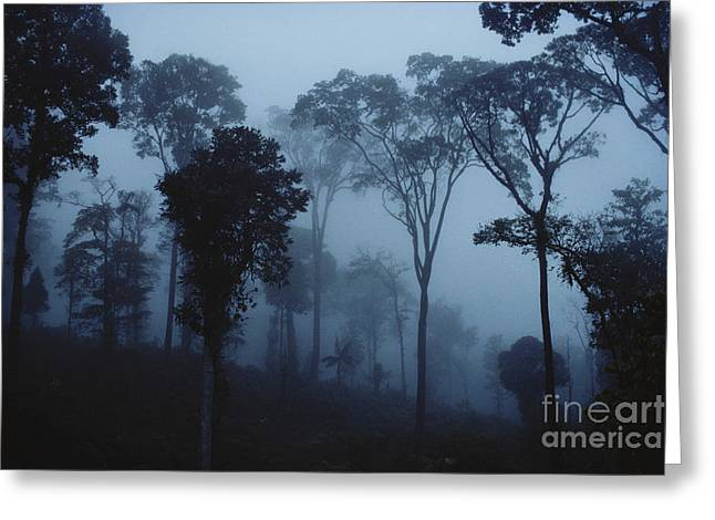 Ghostly Greeting Cards - Misty Cleared Rainforest Greeting Card by Gregory G. Dimijian, M.D.