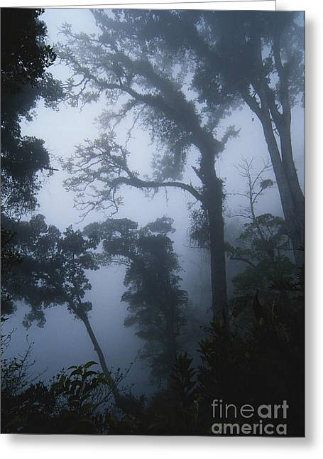 Grey Clouds Greeting Cards - Misty Cloud Forest Greeting Card by Gregory G. Dimijian, M.D.