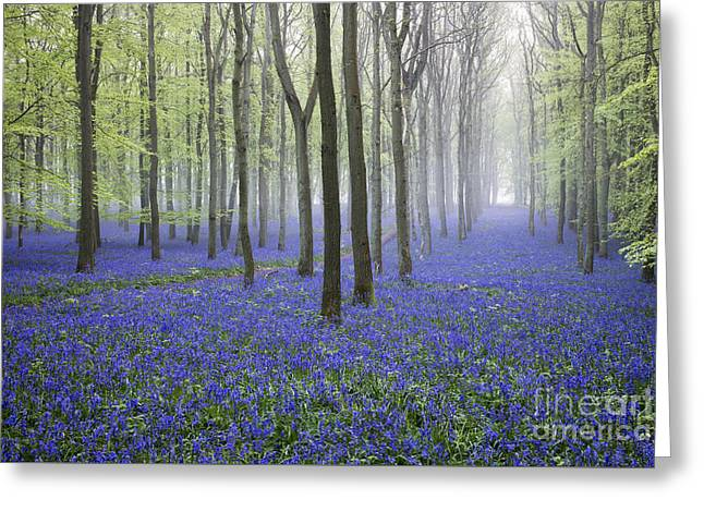 Mystical Landscape Greeting Cards - Misty Dawn Bluebell Wood Greeting Card by Tim Gainey