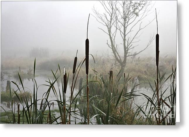 Cane Creek Greeting Cards - Misty day Greeting Card by Heiko Koehrer-Wagner
