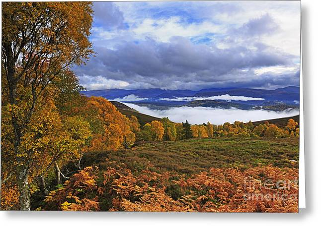 Foggy Day Greeting Cards - Misty day in the Cairngorms II Greeting Card by Louise Heusinkveld