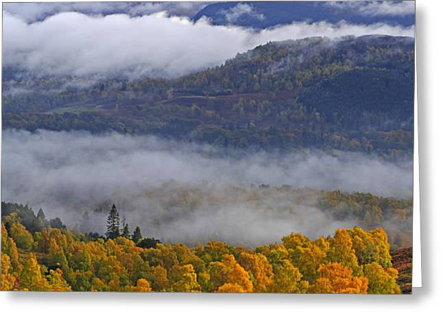 Misty day in the Cairngorms Greeting Card by Louise Heusinkveld