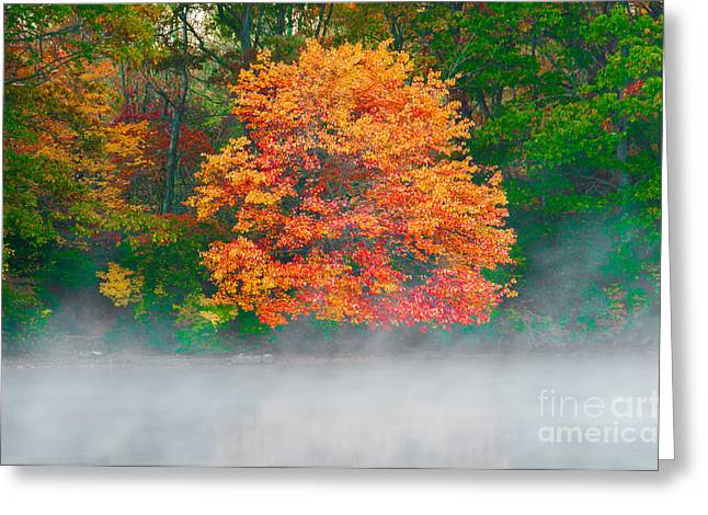 Foilage Greeting Cards - Misty Fall tree Greeting Card by Anthony Sacco