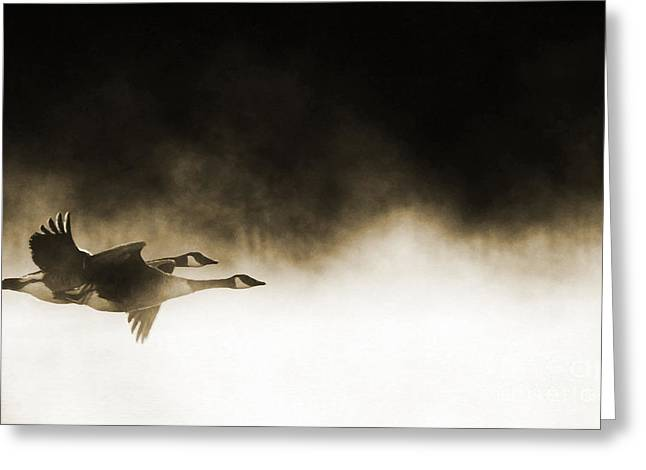 Bird In Flight Greeting Cards - Misty Flight Greeting Card by Tim Gainey