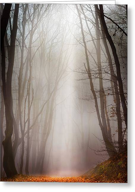 Ethereal Beach Scene Greeting Cards - Misty forest Greeting Card by Dobromir Dobrinov
