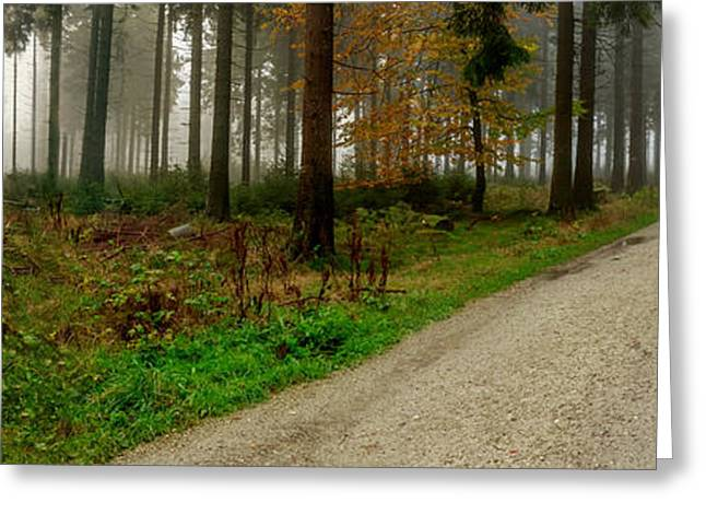 Offshoot Greeting Cards - The Path to Misty Forest Greeting Card by Mah FineArt