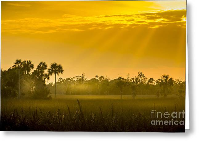 Gulf Of Mexico Scenes Greeting Cards - Misty Glade Greeting Card by Marvin Spates