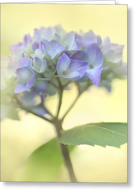 Purple Hydrangeas Greeting Cards - Misty Hydrangea Flower Greeting Card by Jennie Marie Schell