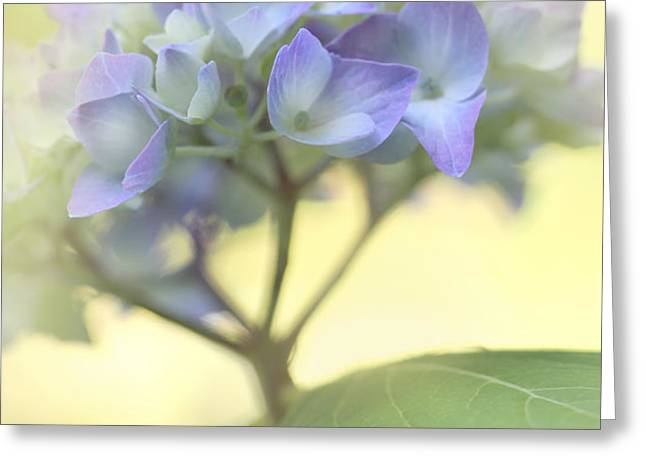 Misty Hydrangea Flower Greeting Card by Jennie Marie Schell