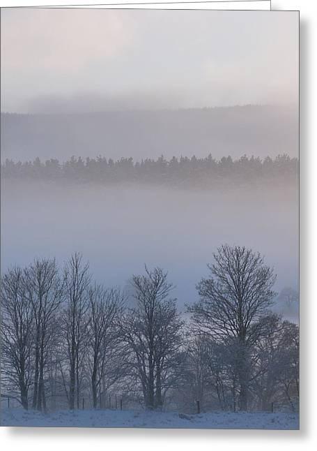 Strachan Greeting Cards - Misty Greeting Card by Jennifer Watson