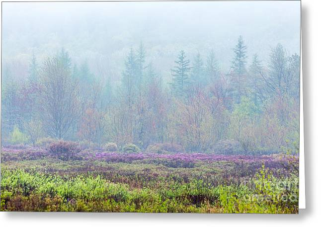 Spring In Maine Greeting Cards - Misty Meadow in Acadia Greeting Card by Susan Cole Kelly