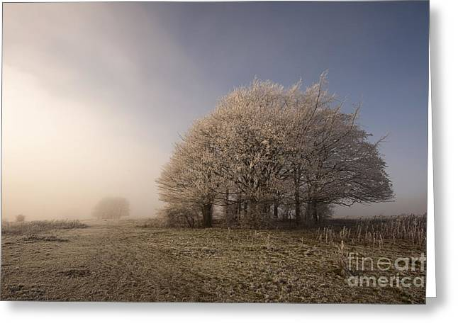 Misty Morn Greeting Card by Anne Gilbert