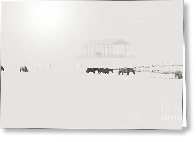 Hayshed Greeting Cards - Foggy  Morn Greeting Card by Roland Stanke