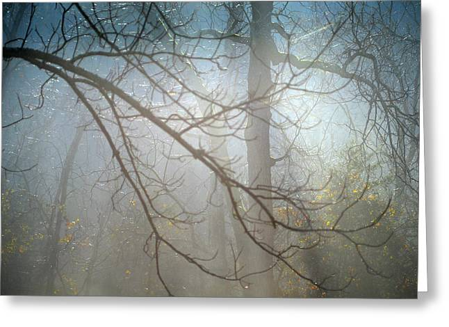 Walnut Tree Photograph Greeting Cards - Misty Morning Greeting Card by Aaron Codling